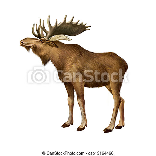 Adult Moose standing. Side view - csp13164466