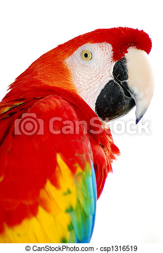 red macaw bird - csp1316519