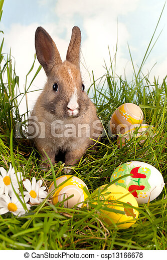 oeufs, Paques, lapin - csp13166678
