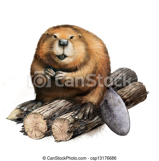 Adult Beaver sitting on logs. - csp13176686