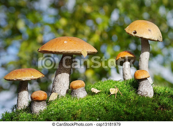 two families of mushrooms meeting in the forest, fantasy - csp13181979
