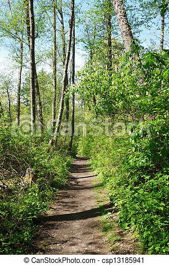 Dash Point State Park. Spring trail. Green fresh forest. - csp13185941