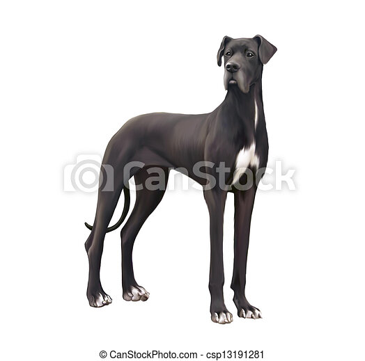 Stock Illustration of Black and white Great Dane Isolated ...