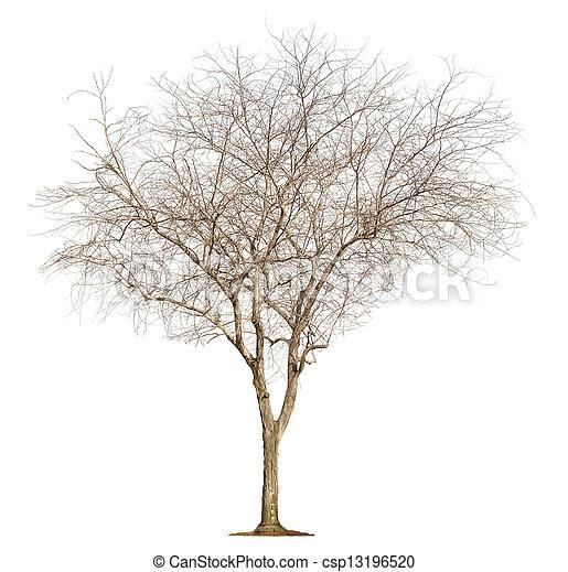 白色, 樹, 背景 - csp13196520