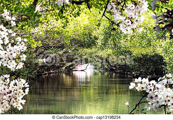Beautiful Sakura place in Taiwan - csp13198234