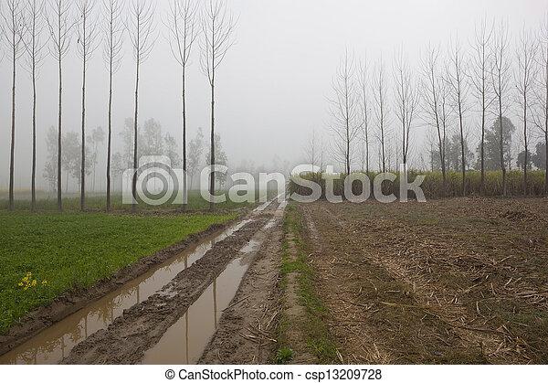 agriculture in rural Punjab - csp13209728