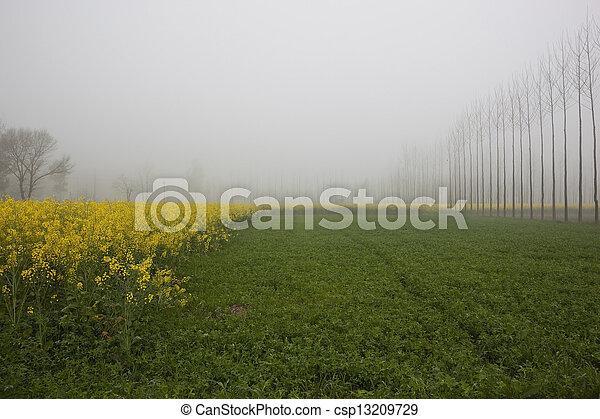Punjabi agriculture - csp13209729