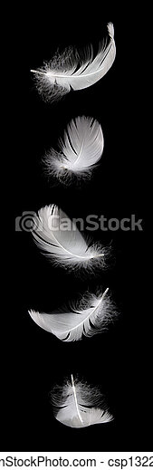 falling white swan feather isolated on the black background - csp13221816