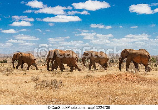 elephants, Tsavo national park, kenya - csp13224738