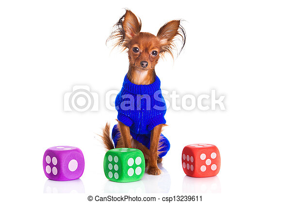 Toy terrier. Russian toy terrier on a white background. Funny little dog - csp13239611