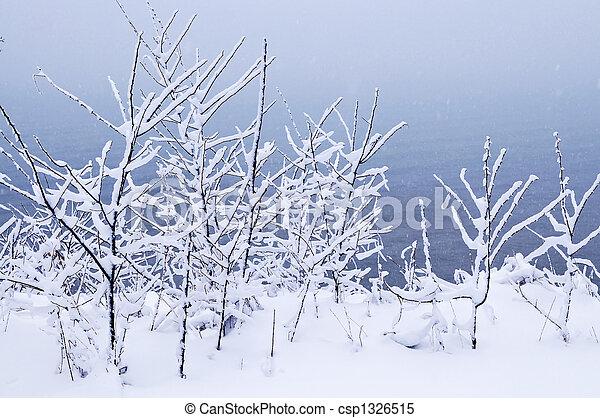 Snowy trees - csp1326515