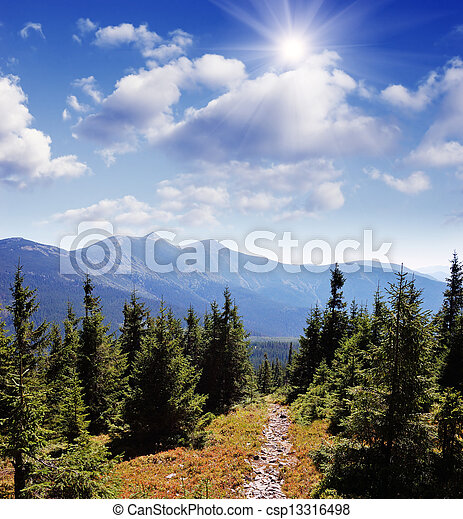 Trail in the mountain forest - csp13316498