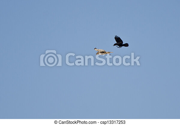Hawk and Crow Engaged in Aerial Combat - csp13317253