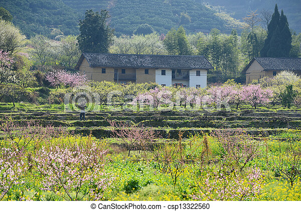 Rural landscape, Peach Blossom in moutainous area in shaoguan district, guangdong province, China - csp13322560