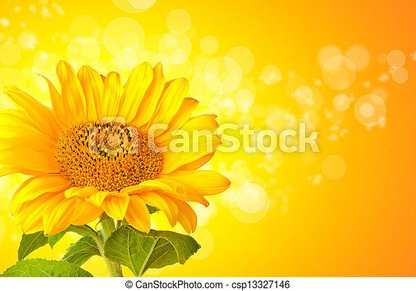 Sunflower blossom detail with abstract shiny background - csp13327146