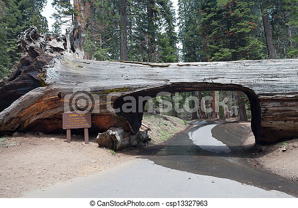 Tunnel log in the Sequoia park - csp13327963