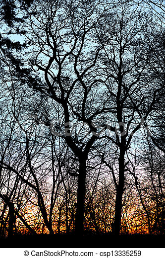 bare trees at sunset - csp13335259