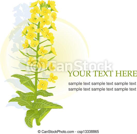 Mustard Flower Drawing of Rapaseed Flower