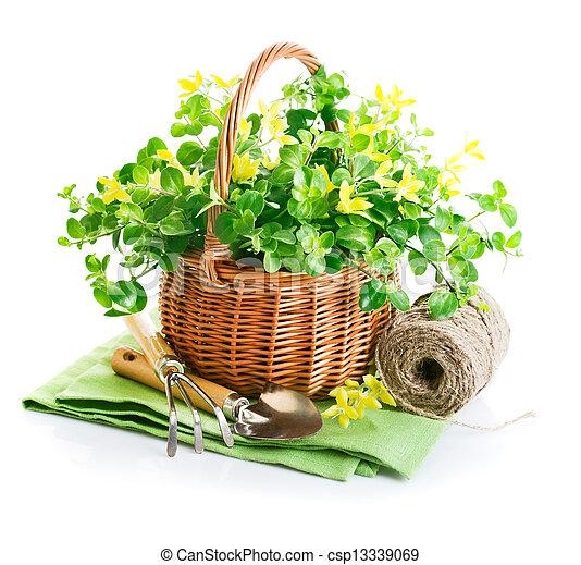 Image de jardin printemps jaune panier fleurs outils for Fleurs jardin printemps