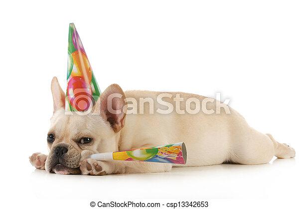 birthday dog - csp13342653