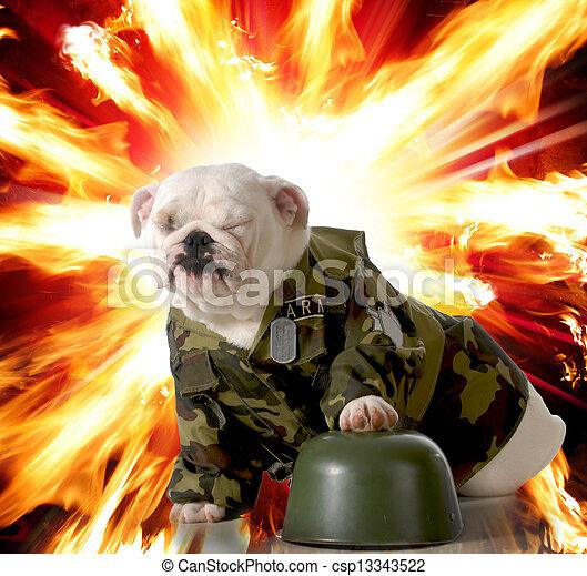military dog - csp13343522