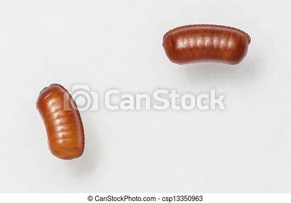 image de symploce sacs lisser cafard pallens oeuf smooth csp13350963 recherchez. Black Bedroom Furniture Sets. Home Design Ideas