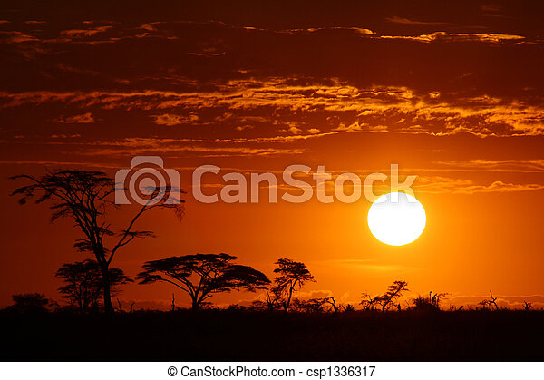 schöne, afrikas, Sonnenuntergang,  safari - csp1336317