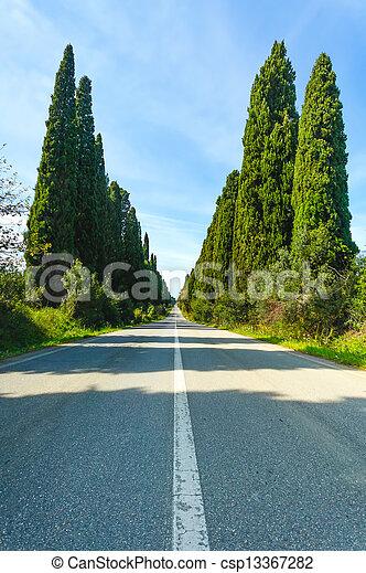 Bolgheri famous cypresses tree boulevard landscape. Tuscany landmark, Italy - csp13367282