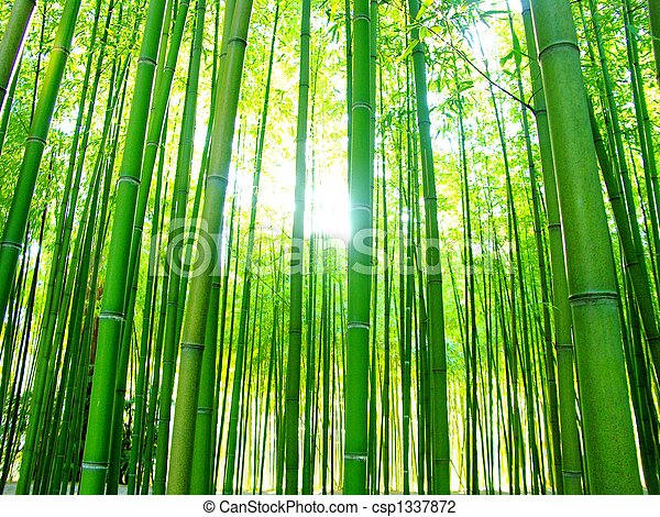 giant bamboos forest - csp1337872