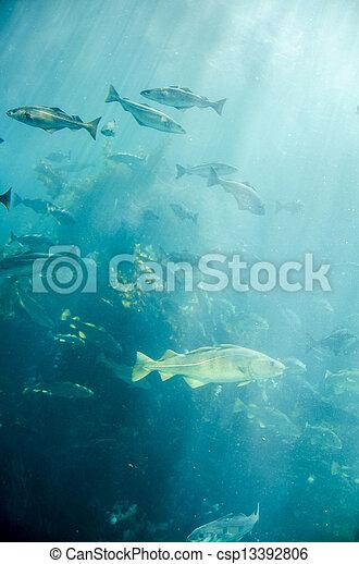 Marine life - Fish - csp13392806
