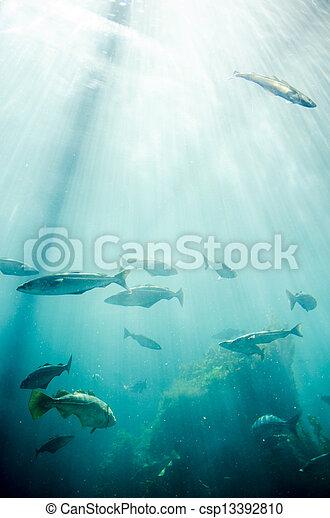 Marine life - Fish - csp13392810