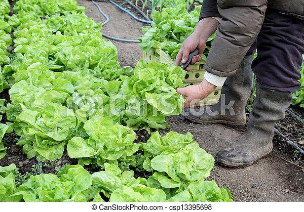 Agriculture - csp13395698