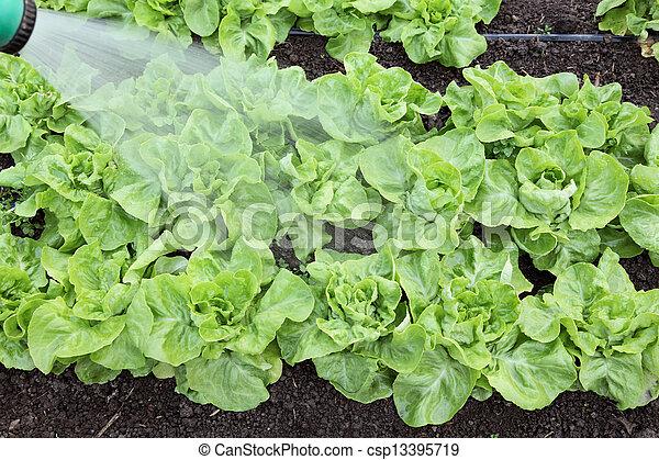 Agriculture - csp13395719
