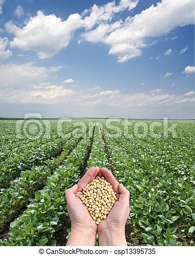 landwirtschaft - csp13395735