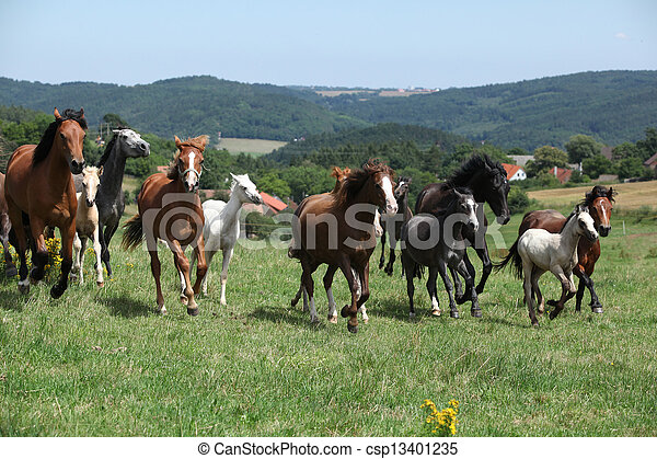 Herd of running horses