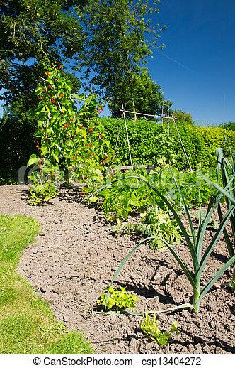 Vegetable garden - csp13404272