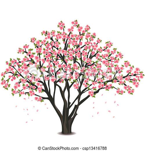 Vector de japonés, Cereza, árbol, flor, encima, blanco - sakura ...