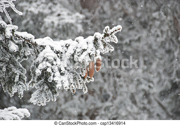 Fir tree at winter time