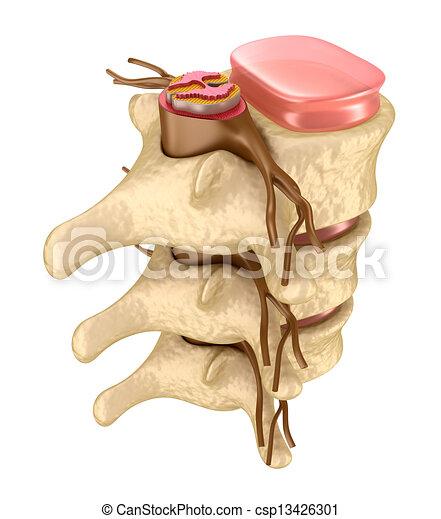 Human spine in details - csp13426301