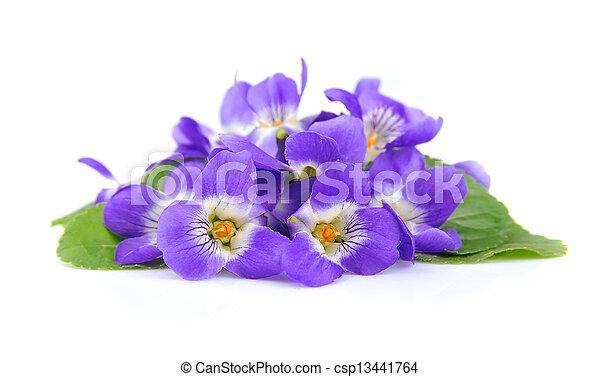 Violets flowers - csp13441764