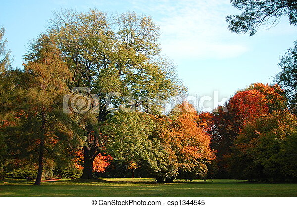 fall in the park with green trees under blue sky - csp1344545