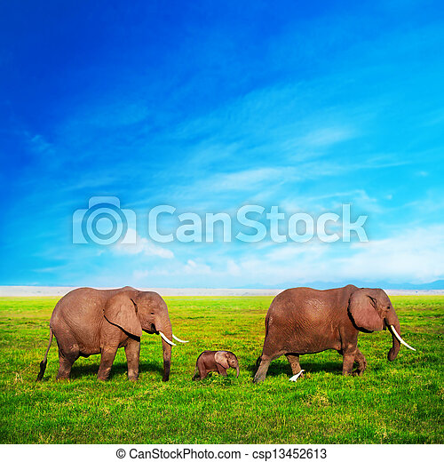 amboseli, familie, Elefanten, afrikas, savanne,  safari, Kenia - csp13452613