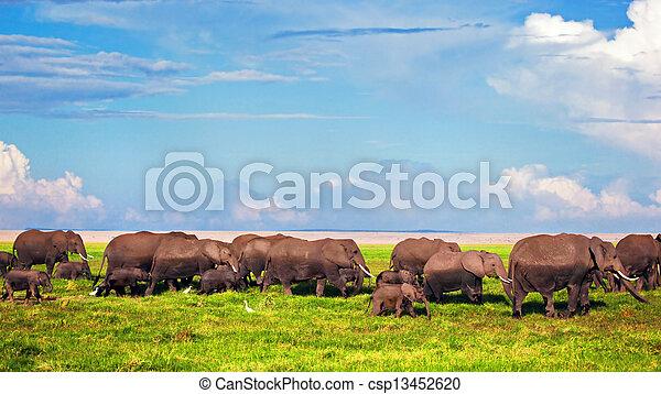 amboseli, Elefanten, afrikas, savanne, herde,  safari, Kenia - csp13452620