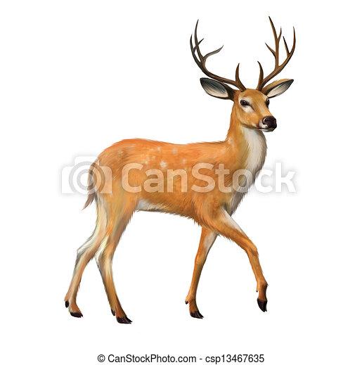 Deer Hoof Drawing Beautiful Deer With Big Horns