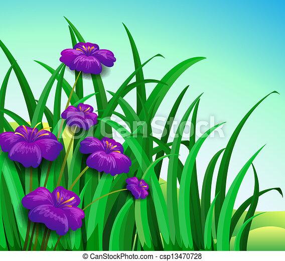 Violet flowers in the garden - csp13470728