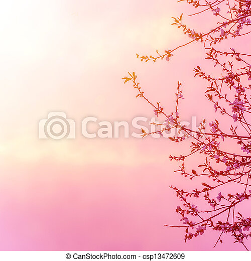 Apple tree blossom on pink sunset - csp13472609