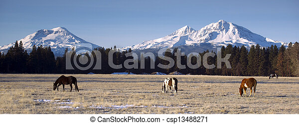Ranch Animals at the Base of Three Sisters Mountains Oregon - csp13488271