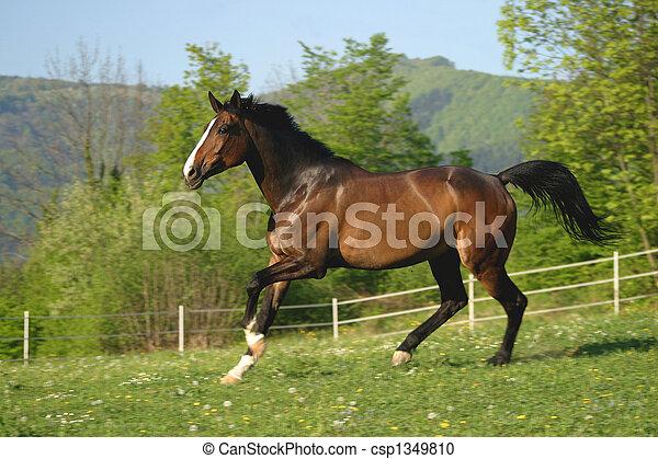 Horse on pasture - csp1349810