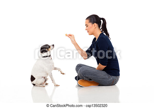 modern woman training a dog - csp13502320