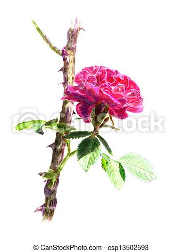 Illustration de rouges rose rosier branche isol rouges rose csp13502593 recherchez - Dessin de rosier ...